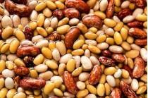 Borlotti, spollichini e zampognari. Le cento varietà di fagioli ischitani