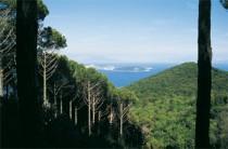 Bosco della Maddalena e Cretaio: tra pini e mirti