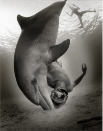 Incontri ravvicinati nel mare di Ischia: il delfino