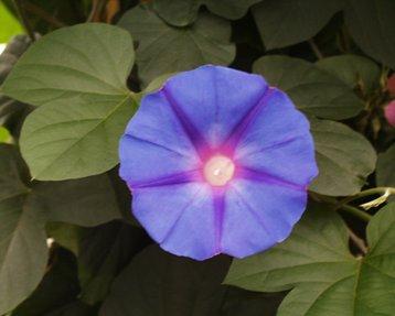 Piante rare e antiche felci: la flora dell'isola di Ischia