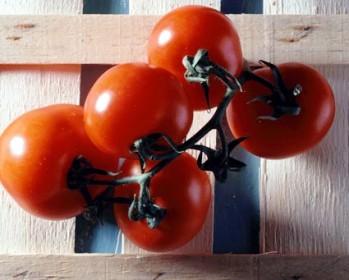 Le bottiglie di pomodoro: una tradizione ischitana