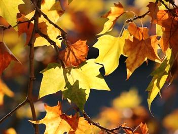 Il magnifico autunno ischitano: novembre tempo di vino novello, funghi e castagne