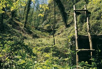 Una fonte nel bosco: Buceto