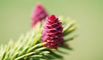 Natale ad Ischia nell'abbraccio della natura