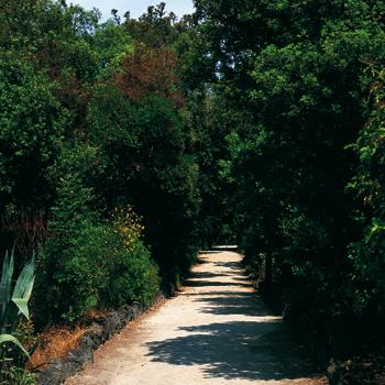 Palazzi antichi, spiagge ed una fonte in pineta. Un percorso misto nel comune di Ischia