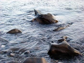 Un semidio dà vita alle acque del Bagnitiello di Casamicciola