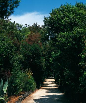 Le pinete di Ischia: un cappello verde tra Casamicciola, Ischia e Barano