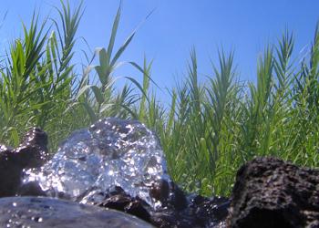 Le sorgenti termali di Forio