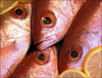 In tavola, profumo di mare: il pesce nella cucina ischitana